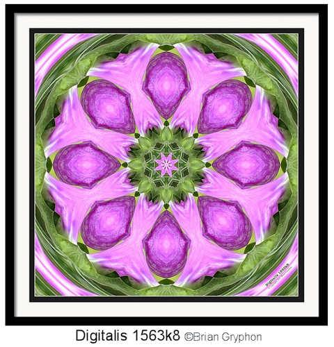 digitalis1563k8framed480wide